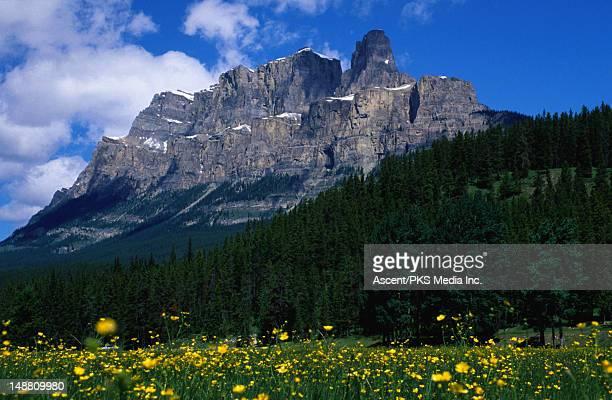 castle mountain. - castle mountain stock photos and pictures