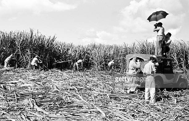 WIDE 60 Castro's Year of Power Episode 101 Pictured NBC cameraman Tom Priestly workers in sugarcane fields before planting during a news documentary...