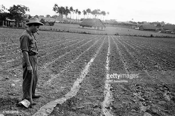 WIDE 60 'Castro's Year of Power' Episode 101 Pictured Tobacco worker watching the irrigation process in a 4day old tobacco planting during a news...