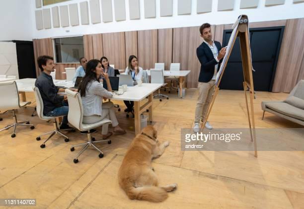 gelegenheitsunternehmer, der in einem startbüro eine präsentation macht - servicehund stock-fotos und bilder