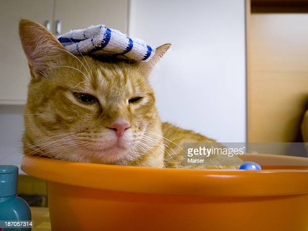 Cat acting Japanese traditional bathing style