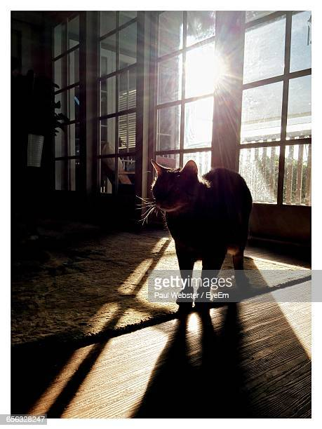 cat against door at home - the webster stock pictures, royalty-free photos & images