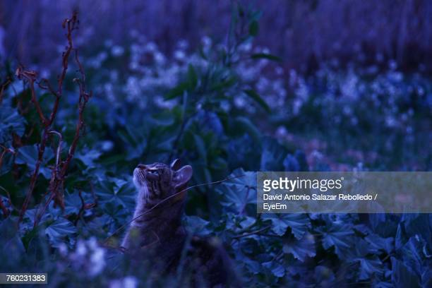 Cat Amidst Plants At Night