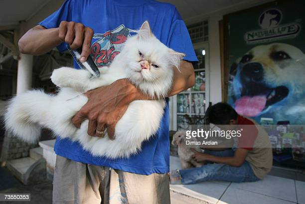 A cat and a dog are pampered in a pet beauty parlour March 12 2007 in Jakarta Indonesia Scientists warned pet owners are at a greater risk of...