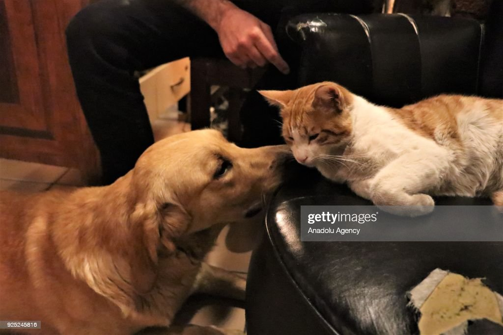 Cafe opens its doors to stray animals in Turkey's Isparta : News Photo