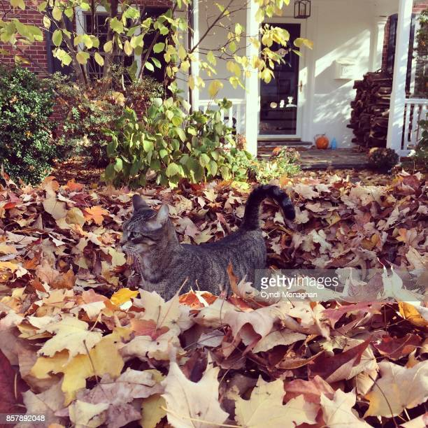cat and autumn - pumpkin cats stock pictures, royalty-free photos & images