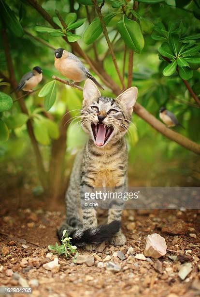 Katzen und Vögel