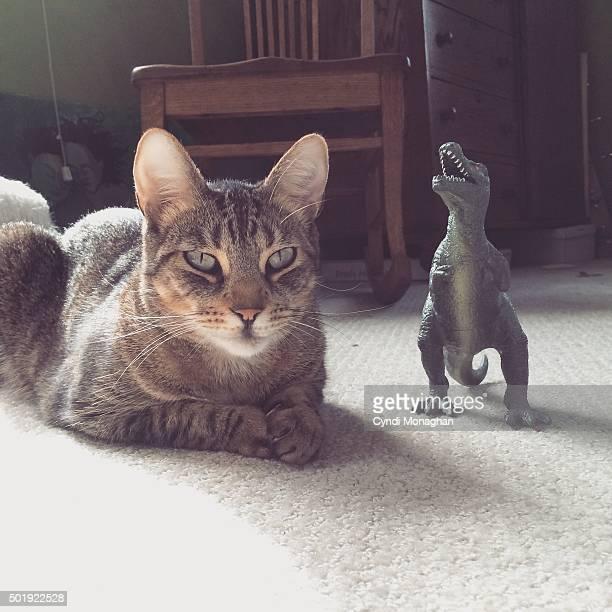 Cat and Dinosaur