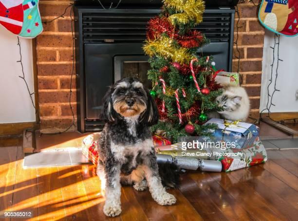 Cat and Dog around the Christmas tree.