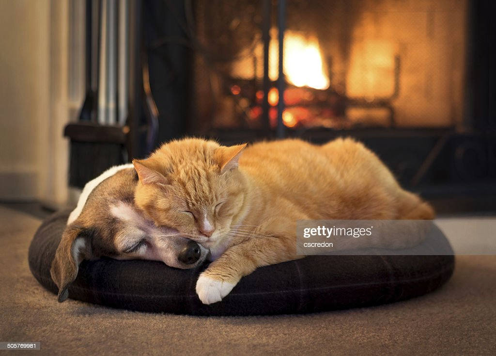 cat and dog by the fireplace : Stockfoto