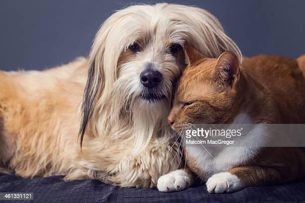 Cat and Dog in Studio
