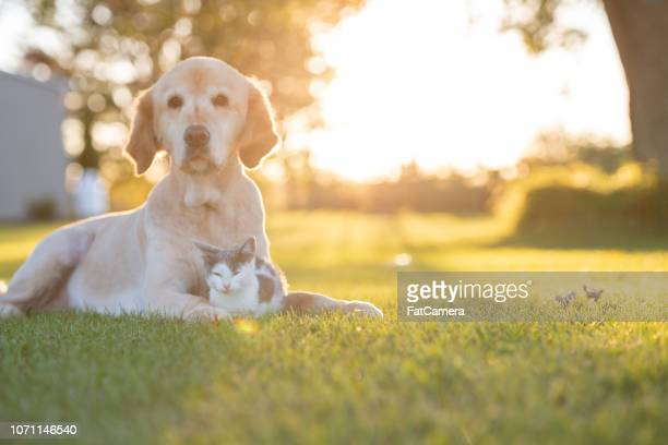 Cat and dog in the sun