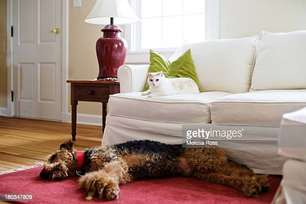 Cat and dog lying together in a living room