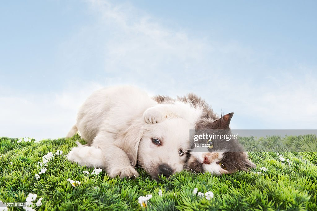 Cat and dog on grass : Stock Photo