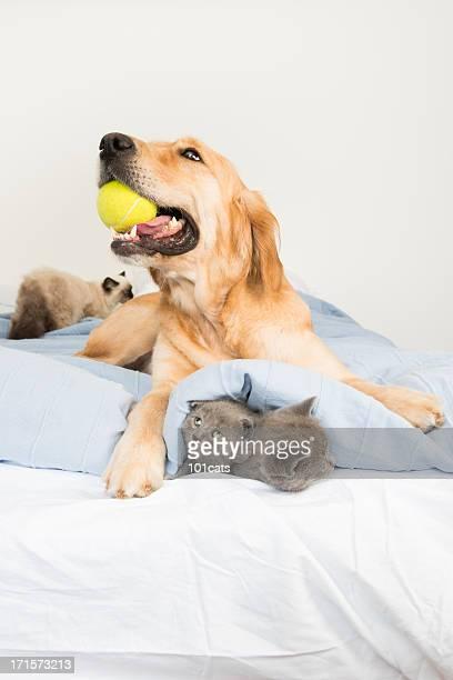 Gato y perro