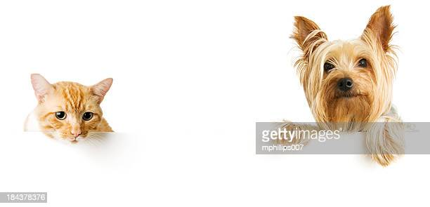 cat and dog - cat and dog stock pictures, royalty-free photos & images