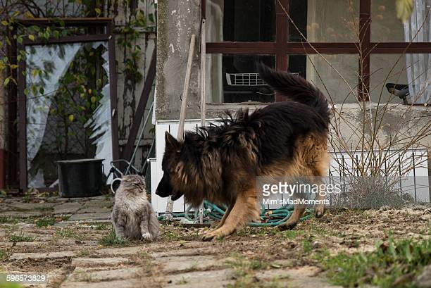 Cat and dog playing in garden