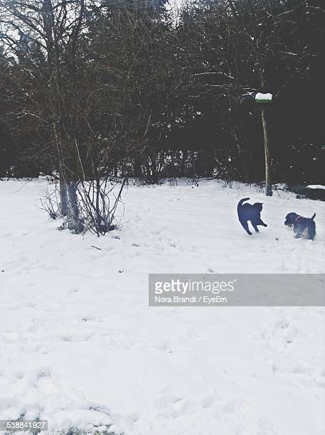 Cat And Dog Playing On Snow Field During Winter