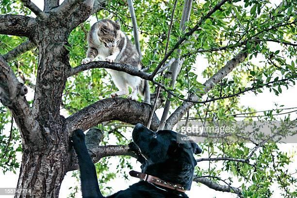 Cat and dog quarrel