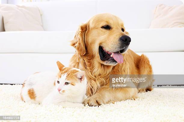 cat and dog resting together. - dog and cat stock photos and pictures