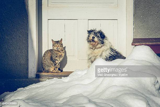 Cat And Dog Sitting Near Closed Door By Snow
