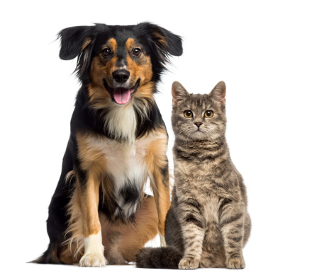 Cat and dog sitting together 489272417