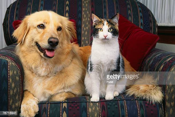 cat and dog sitting together - dos animales fotografías e imágenes de stock
