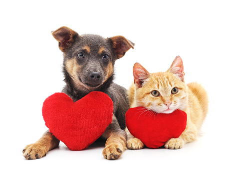 Cat and dog with red hearts. 1091878344