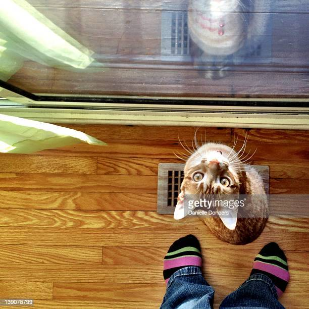 """cat and feet - """"danielle donders"""" stock pictures, royalty-free photos & images"""