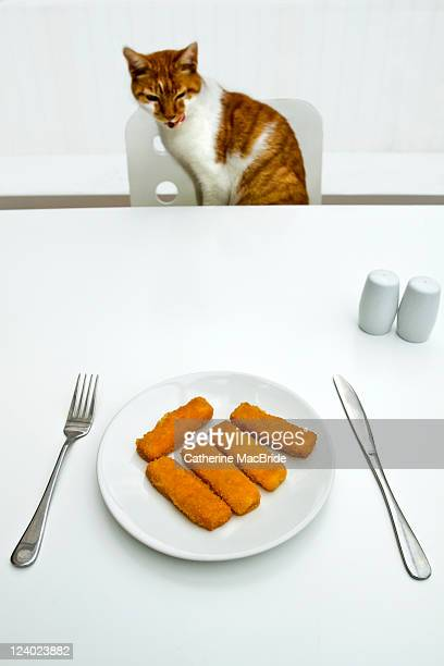 cat and fish fingers - catherine macbride stock pictures, royalty-free photos & images