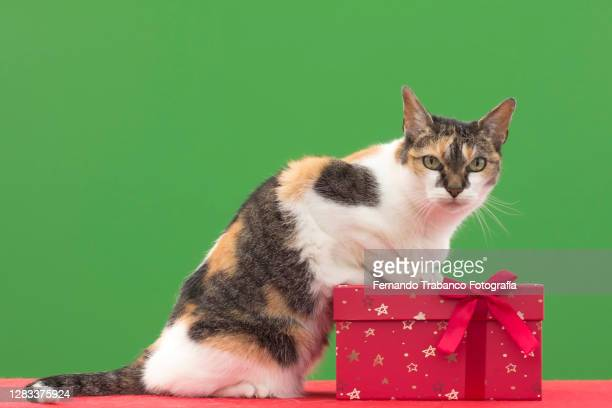 cat and gift box on green background - happy birthday cat stock pictures, royalty-free photos & images
