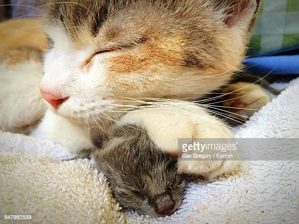 Cat And Kitten Relaxing On Rug At Home