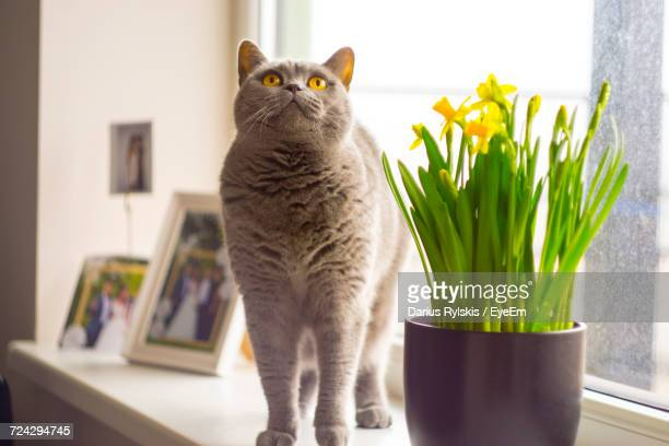 Cat And Vase On Table At Home