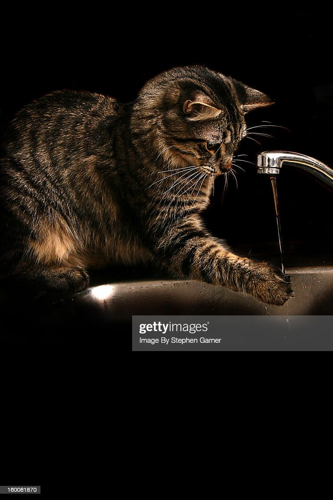 Cat and Water : Foto stock