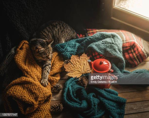 cat and wool sweaters - jumper stock pictures, royalty-free photos & images