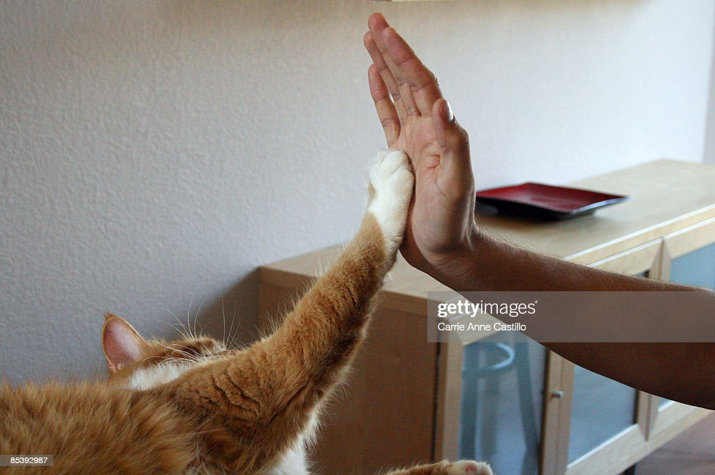 Cat appears to give person a high five : Stock-Foto