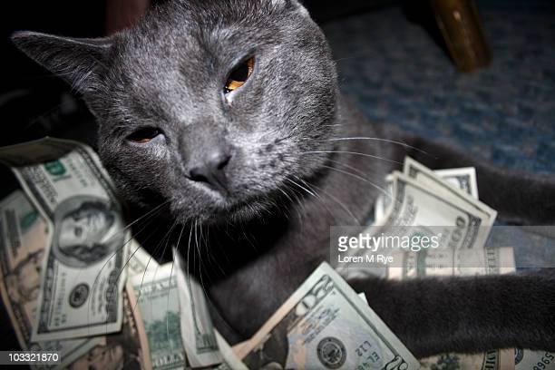 Cat around Ruppyes