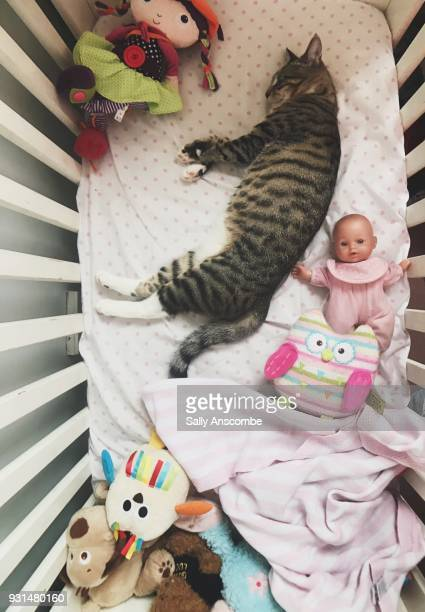 Cat asleep in a child's cot