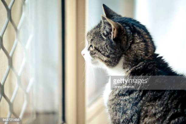 cat at door - domestic animals stock pictures, royalty-free photos & images