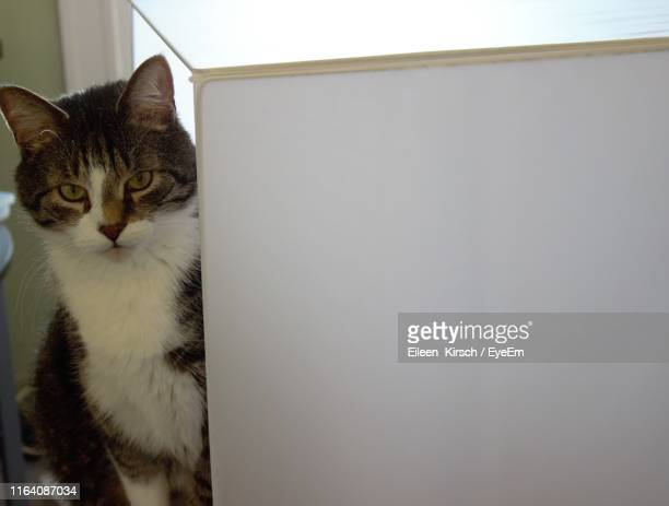 cat at home - eileen kirsch stock pictures, royalty-free photos & images
