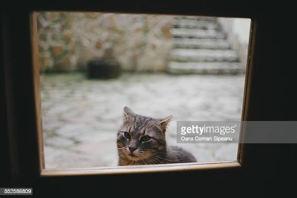 Cat at the door
