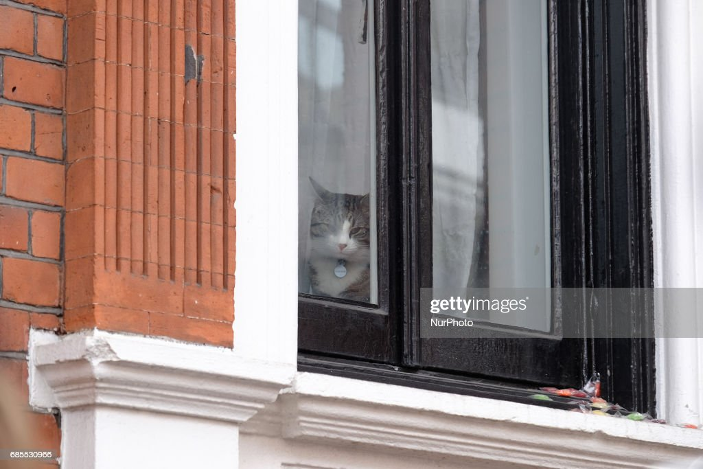 A cat at the Ecuadorian embassy as people wait for Julian Assange to come out and make a statement, in London, on May 19, 2017.