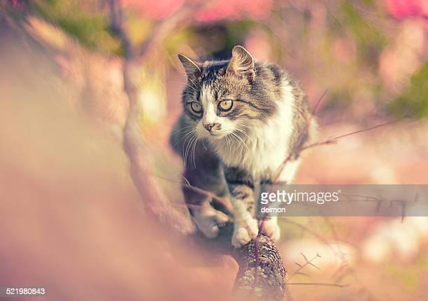Cat balancing on tree branch