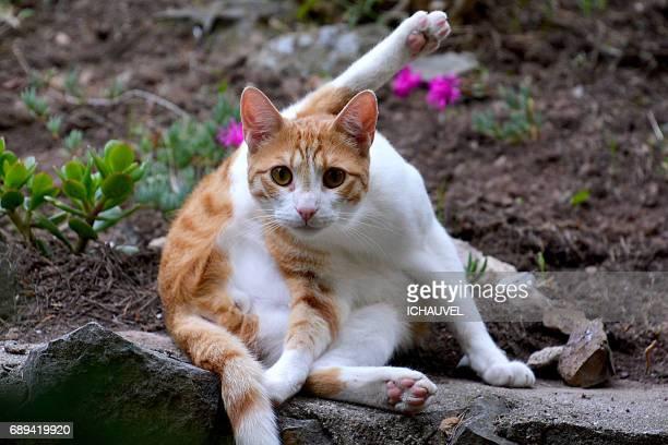 Cat bath France