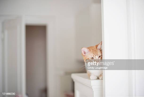 Cat behind door