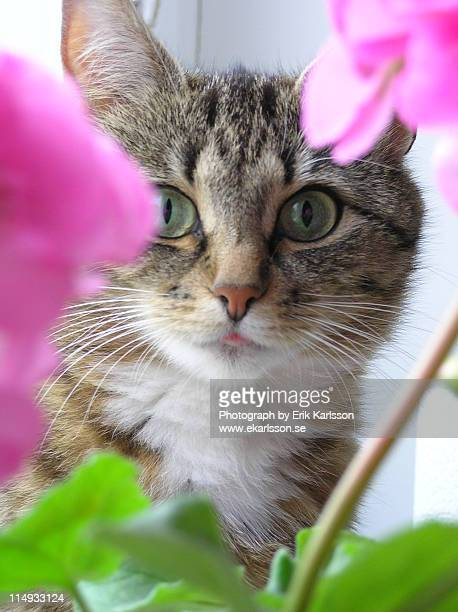 Cat behind plant