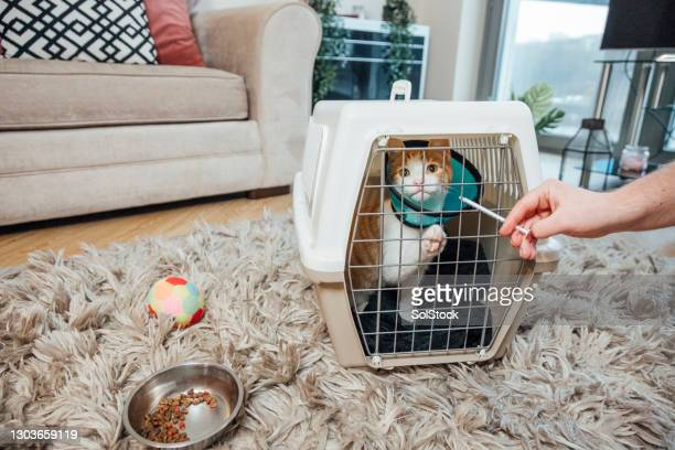 cat being given medicine - pet toy stock pictures, royalty-free photos & images