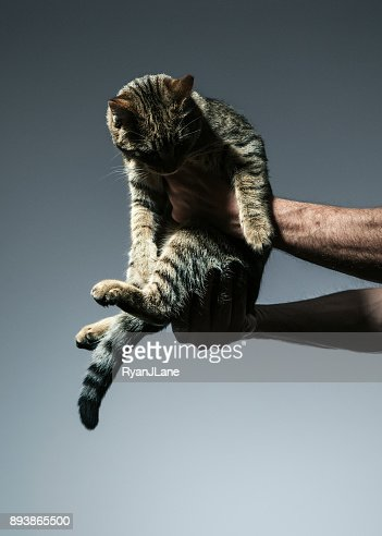 Cat Being Held by Man