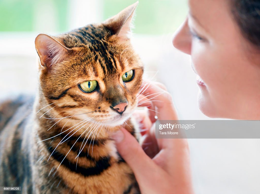 cat being stroked by woman : Stock Photo