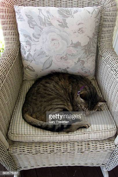 A cat belonging to CASSANDRA PETERSON sits in a chair her Los Feliz home she shares with husband Mark Pierson their daughter